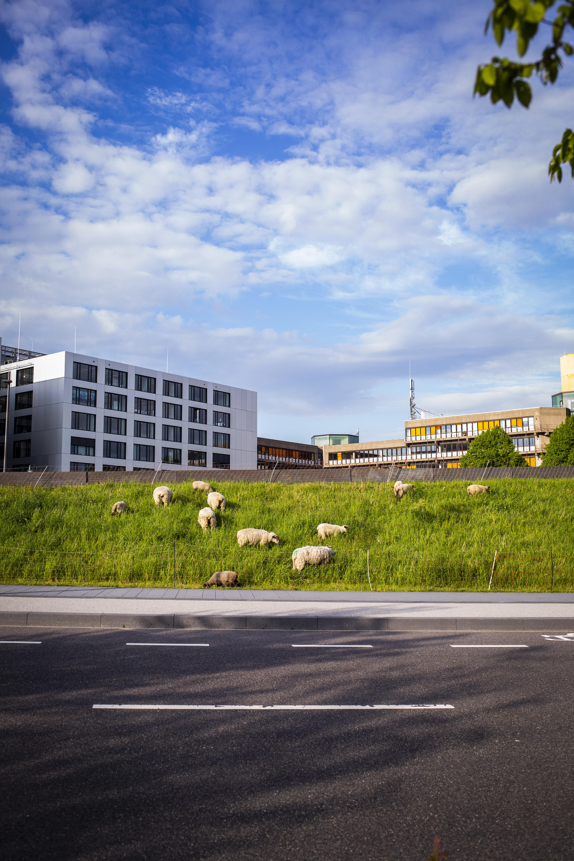 Campuslauf der RWTH Aachen.